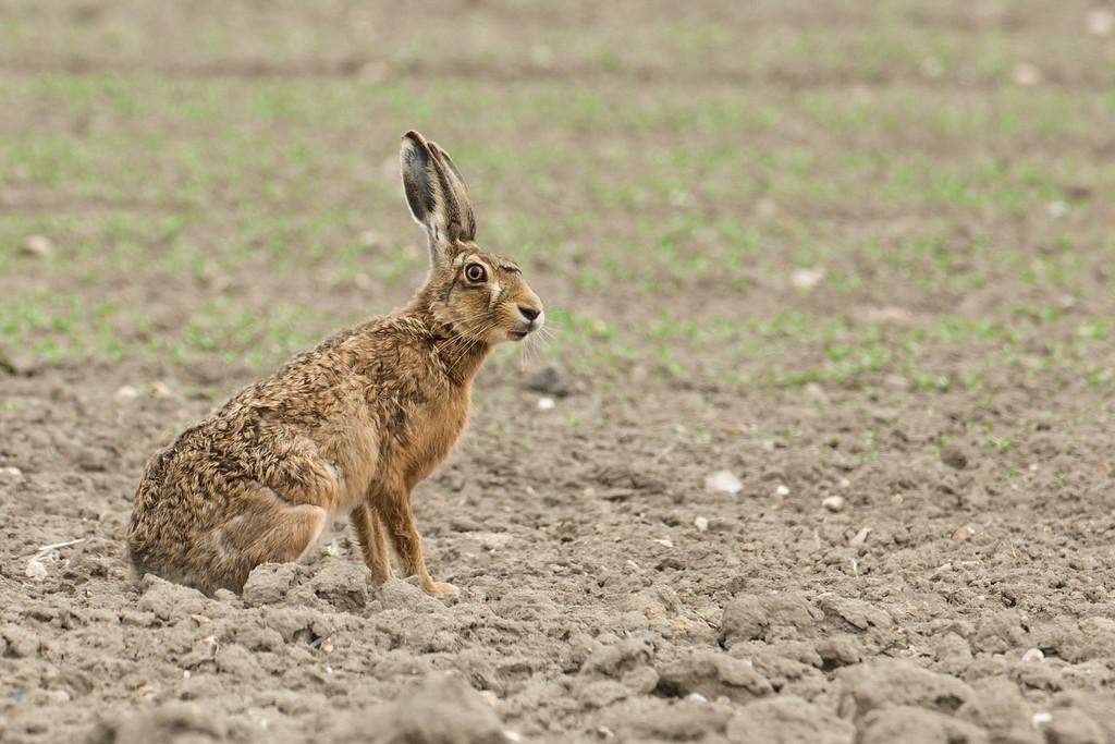 IMAGE: https://chris-stamp.smugmug.com/UK-mammals/i-6BwPrnB/0/XL/I51A9497-XL.jpg