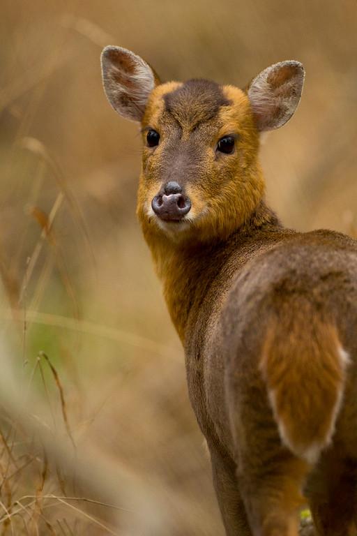 IMAGE: https://chris-stamp.smugmug.com/UK-mammals/i-JdCF5cf/0/XL/I51A5542-XL.jpg